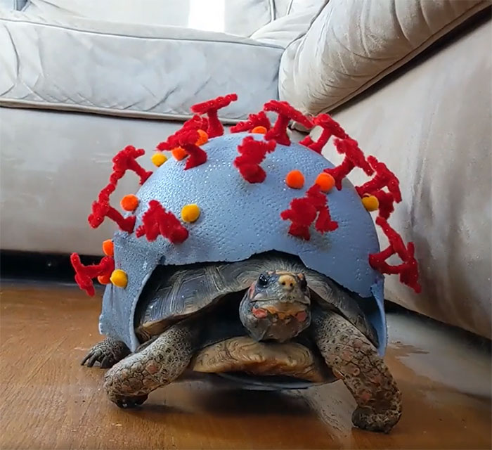 My Tortoise Halloween Costume For 2020