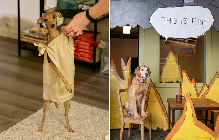 40 Pets That Rocked Their Halloween Costumes