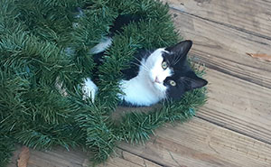 What Weird Thing Does Your Cat Do For Christmas?