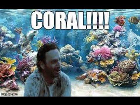 coral-5fa960f64434f.jpg