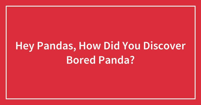 Hey Pandas, How Did You Discover Bored Panda? (Closed)