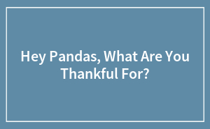 Hey Pandas, What Are You Thankful For?
