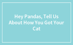 Hey Pandas, Tell Us About How You Got Your Cat