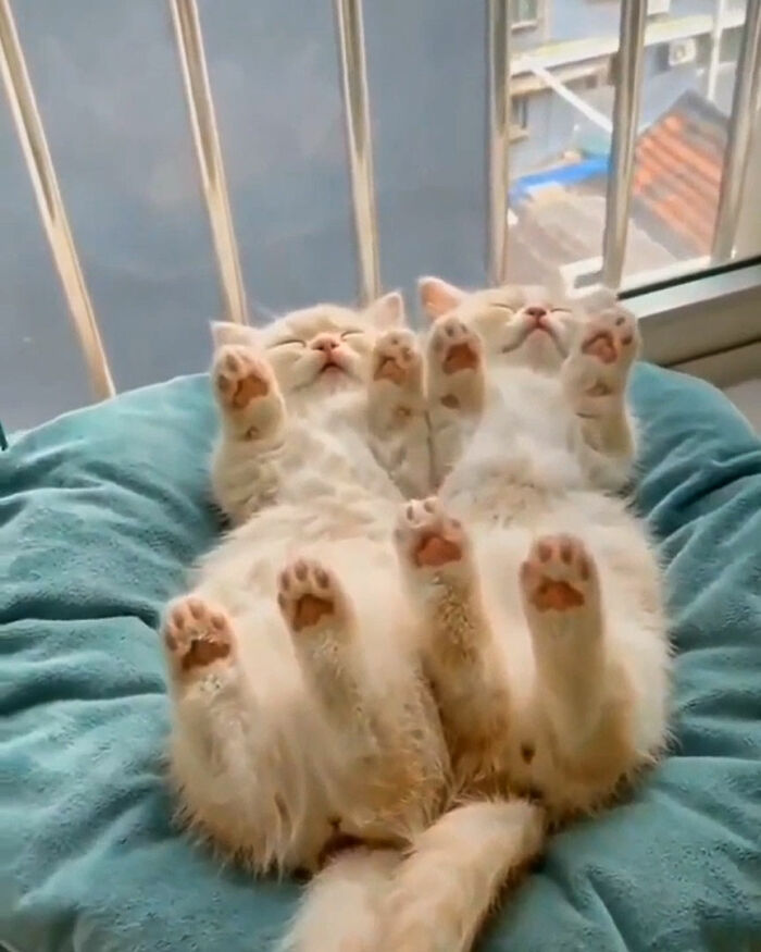 We Sleep With Our Toes To The Sky