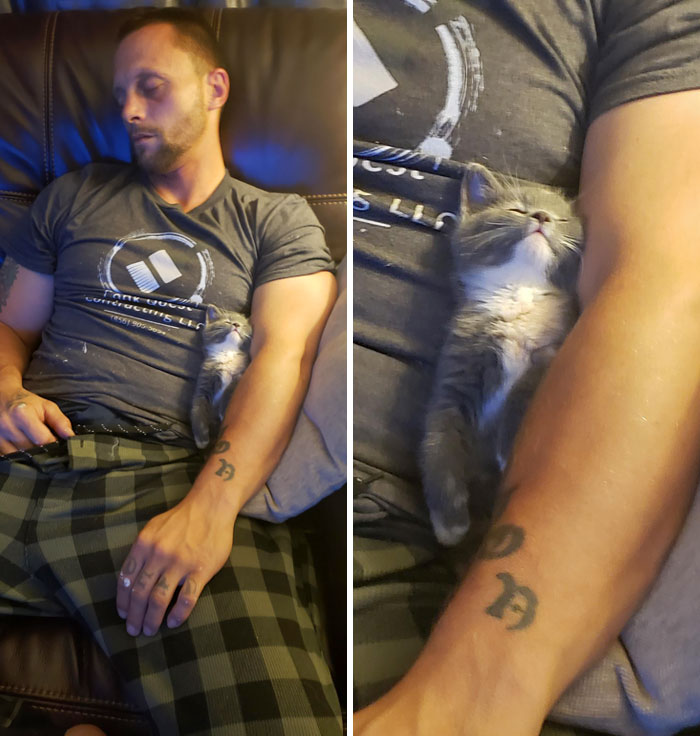 Man And Kitten Taking A Cat Nap