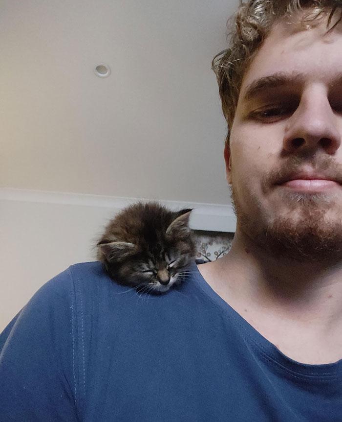 Coco Likes To Nap Like A Birdy
