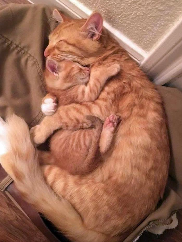 Baby Kitty Sleeps With Mom