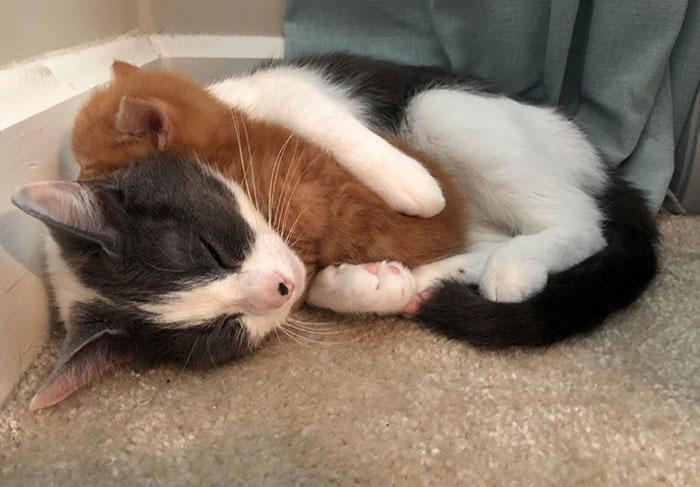 We Got A New Kitten, But I Think Our Cat Got A New Kitten