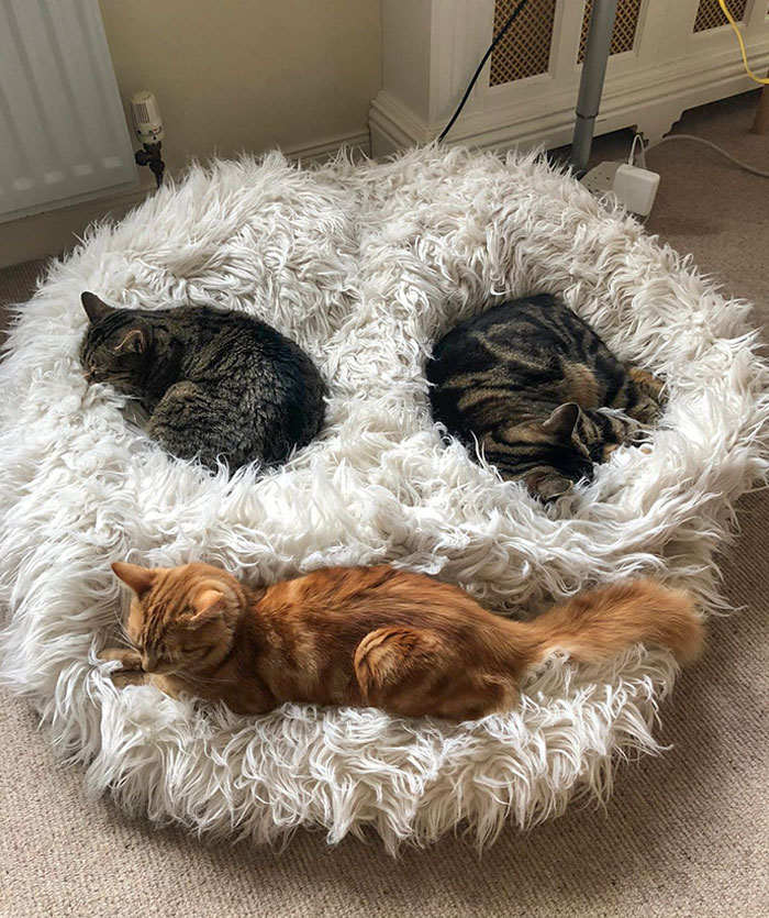My Cats Formed A Smiley Face Today