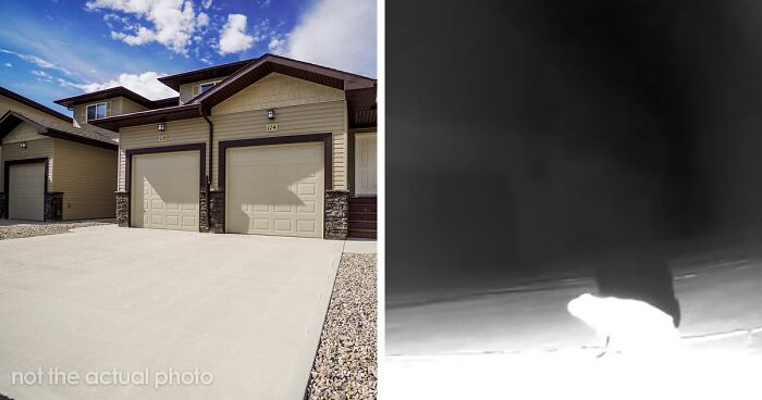 Genius Frog Came Up With A Way To Draw In And Hunt Bugs Using This Tumblr User's Driveway Lights