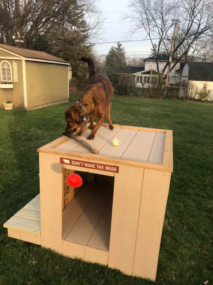 Did-It-For-My-Dog-Challenge-Fb