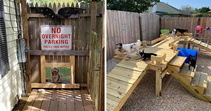 """31 Dog Owners Show Off Some Of The Coolest Things They Did For Their Dogs In The """"I Did It For My Dog"""" Challenge On Facebook"""