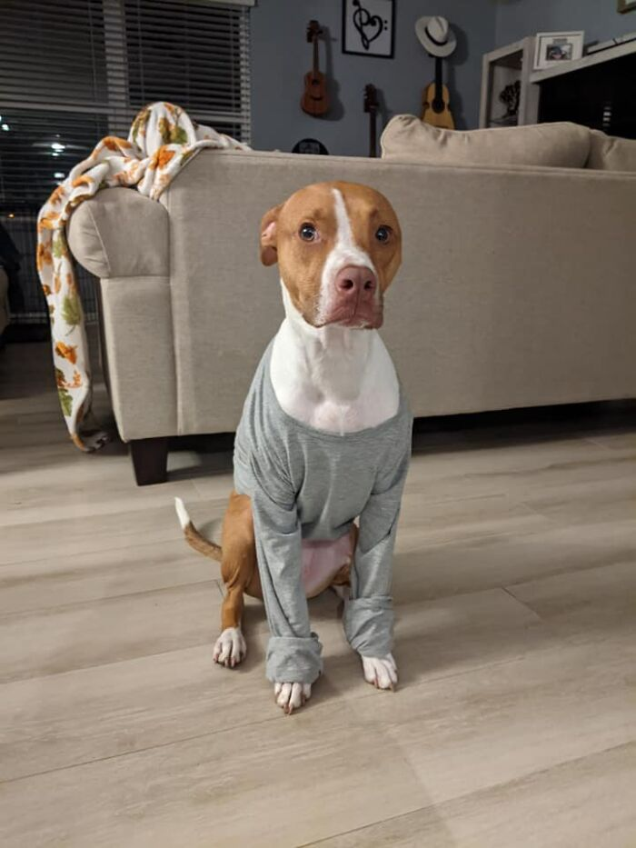 Disapproving-Dog-Challenge-Facebook