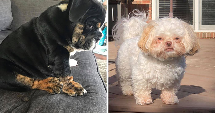 People Are Sharing Pics Of Their Dogs Giving The Most Disapproving Looks For The #DisapprovingDogChallenge, And It's Hilarious (30 Pics)