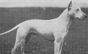 Here Are 18 Photos Showing Dog Breeds Today Vs. 100 Years Ago