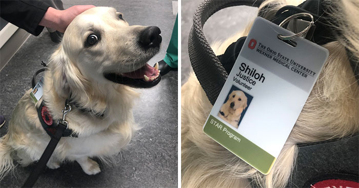 Hospital Hired A Dog Employee Whose Only Job Is To Go Around Saying Hi To Other Employees While They Work