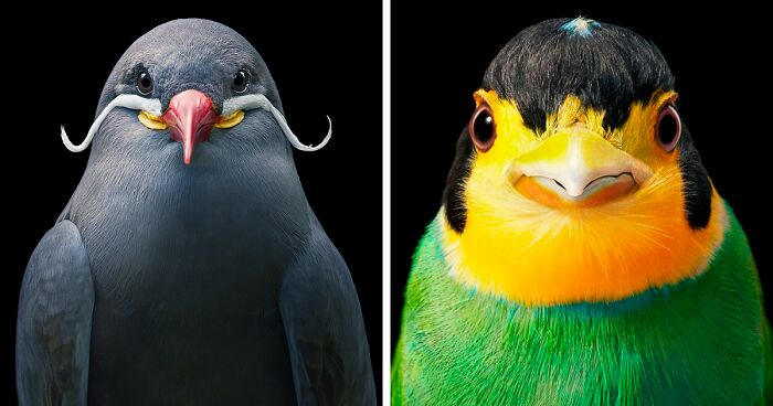 25 Portraits Of Rare And Endangered Birds That Look Simply Stunning