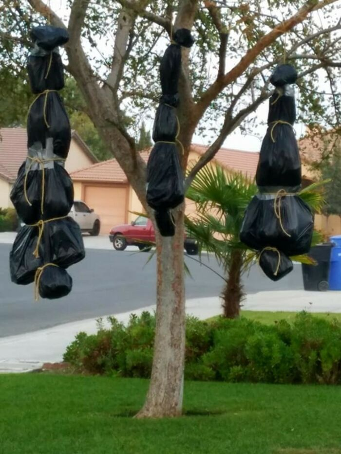 Body Bags Hanging From A Tree