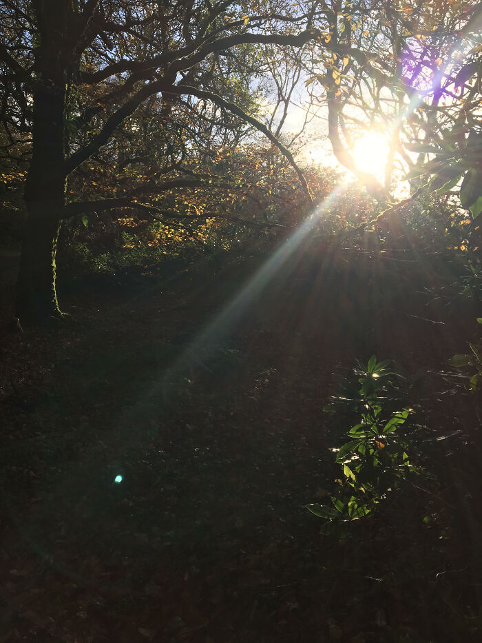 I Took This Photograph On My I Phone 6 When I Was Out Walking My Dog In The Woods Up Where I Live. I Just Pointed And Pressed The Button , Nothing Else. I Just Got Lucky With The Light.