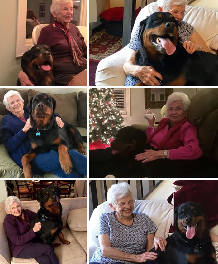 """A Rottweiler? Well I Must Admit I Have Always Preferred Lap Dogs"" Granny Before She Met Gus"
