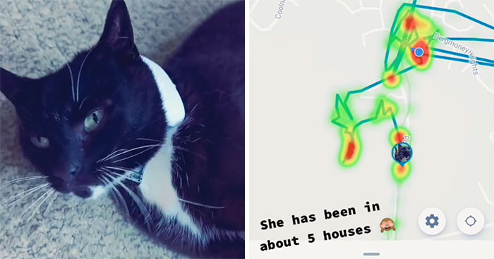 Owner Put A Tracker On Her Cat And Discovered She Has Been Visiting 5 Houses