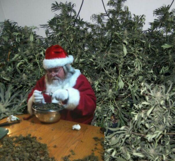 grow-op_Santa2-5fb7728ce21ff.jpg