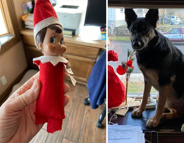 The 'Guilty Dog' Challenge Got People Competing About Whose Dog Is The Naughtiest (30 Pics)