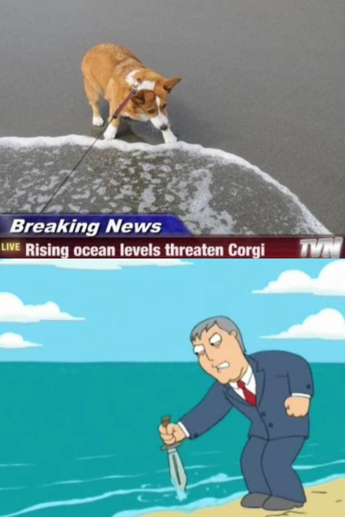 Never Mess With A Corgi