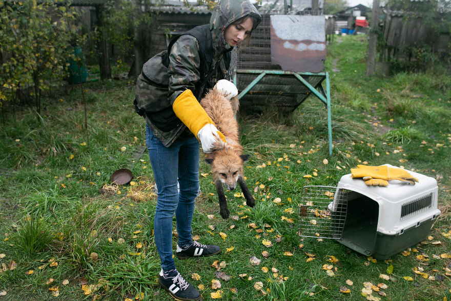 These Starving Animals Were Left To Die On A Fur Farm, Thankfully These Rescuers Saved Them