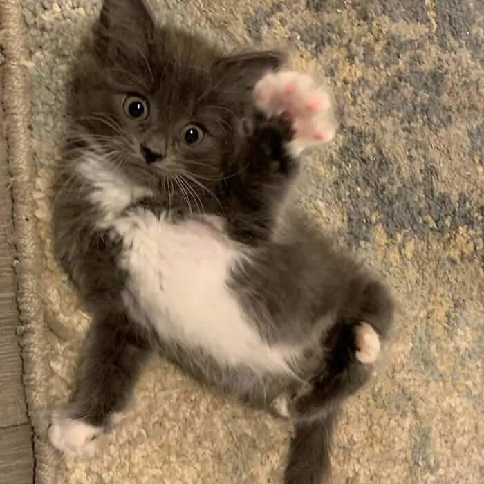 Kitten With Twisted Legs Wins People's Hearts And Finds Her Forever Home 4