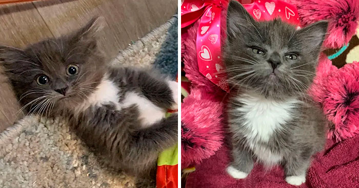 Kitten With Twisted Legs Wins People's Hearts And Finds Her Forever Home