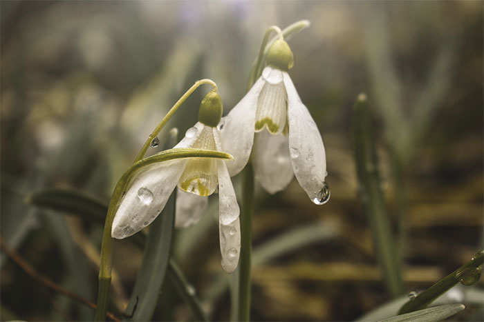 I Captured These 34 Macro Photos Of Flora And Fauna