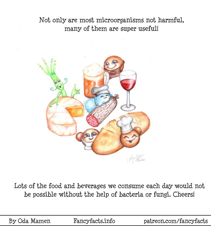 Microorganisms In Food