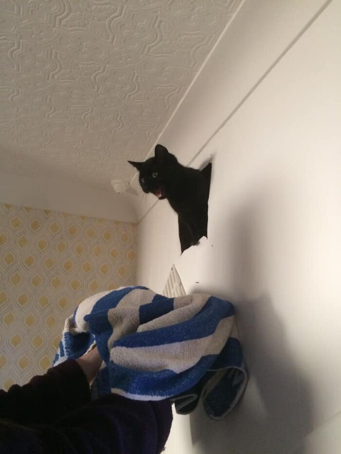 3 Years Ago On Bonfire Night This Void Yelled Out From The Void Of My Damn Walls/Roof. My Wall Vent, Not My Cat