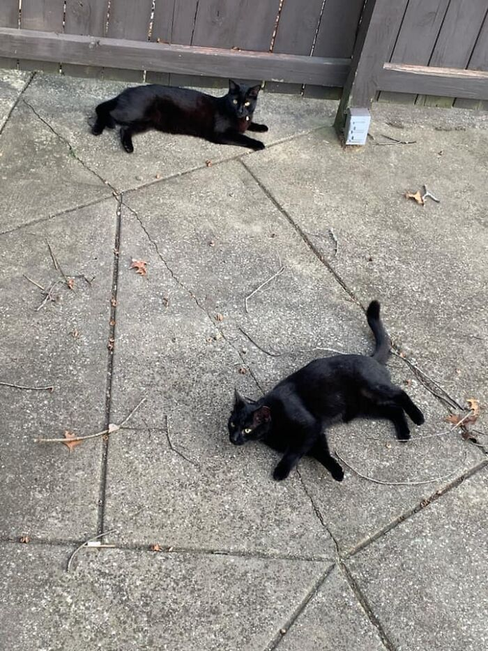 My Wife And I Have One Cat, Named Ursula. She Lives In The House. Neither Of These Kitties Are Ursula