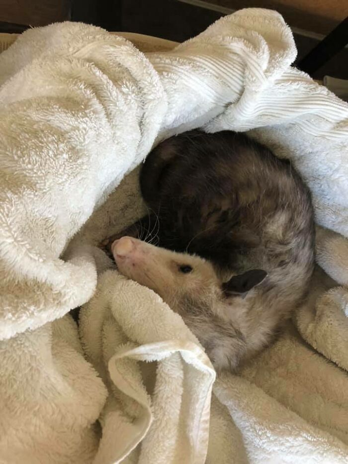 My House's Cat Bed, Not My Possum...