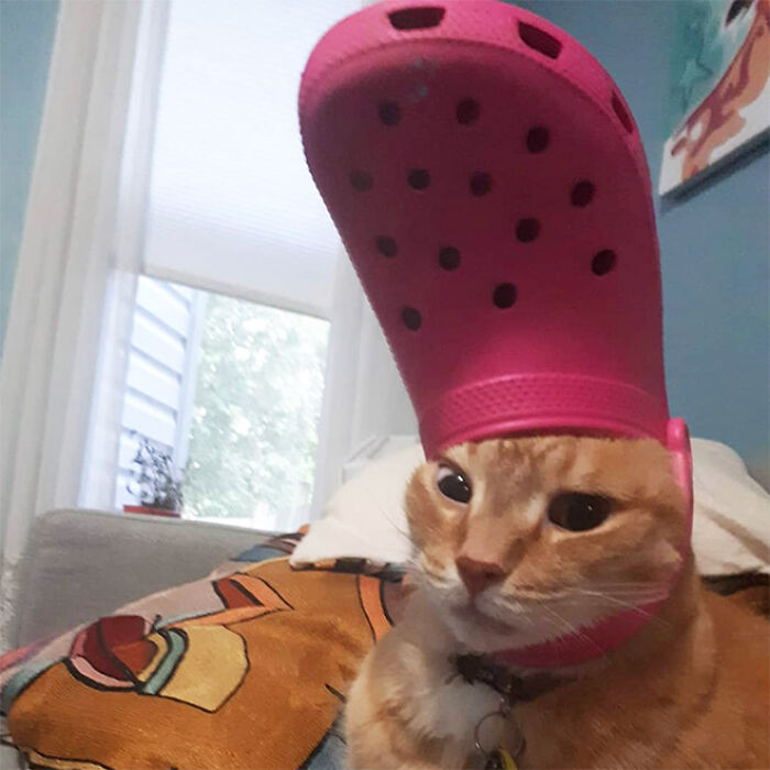 Pets-Slipper-Hats-Crocs