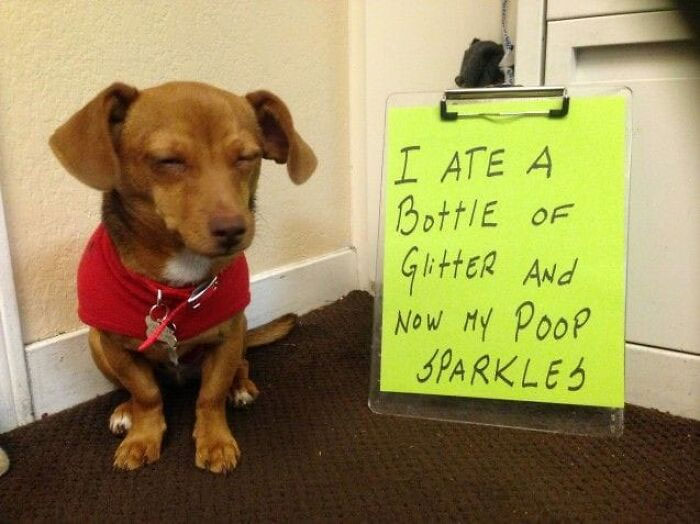 50 Hilarious Pets That Got Shamed In This Facebook Group For Being Naughty