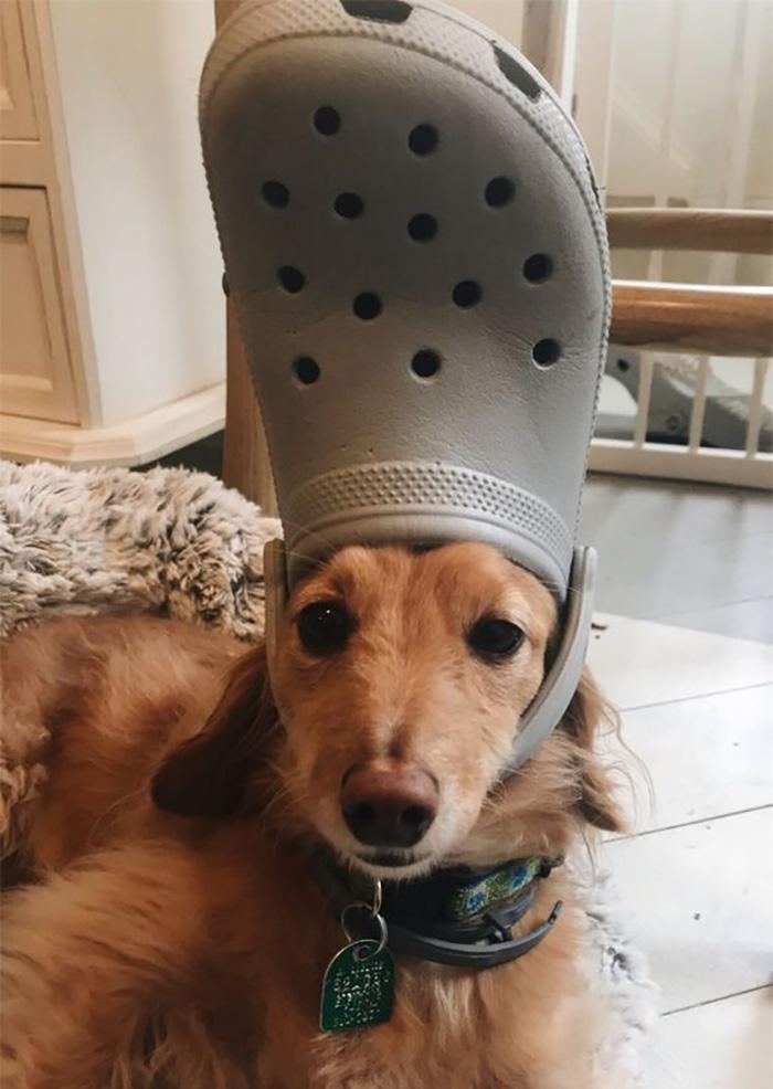 Pets-Slipper-Hats-Crocs