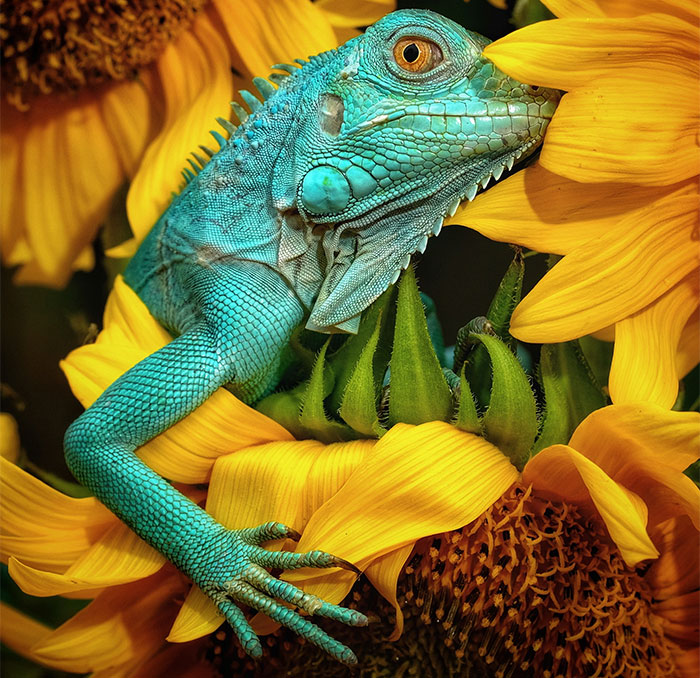 50 Of The Best Photos From Our #Animals2020 Contest To Brighten Your Day