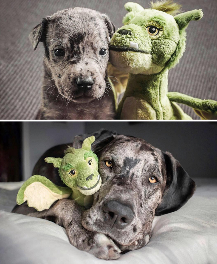 Elliot's Owner Shares What He Looked Like At 4 Weeks vs. Full Grown, With His Favorite Toy