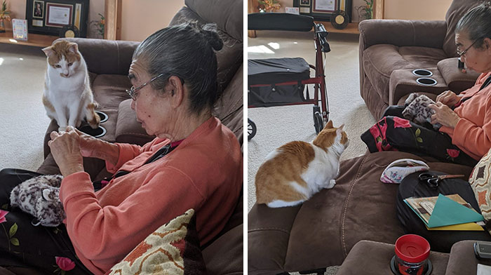 My Cat Ripped Open His Favorite Toy. This Is My Grandma Sewing It Back Together