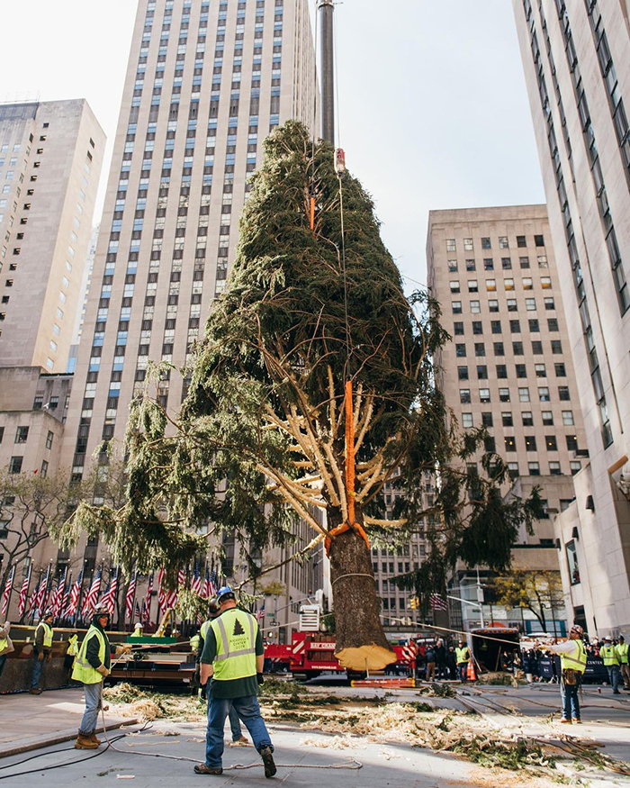 People Are Shaming This Rockefeller Center Christmas Tree, So The Center Claps Back   Bored Panda