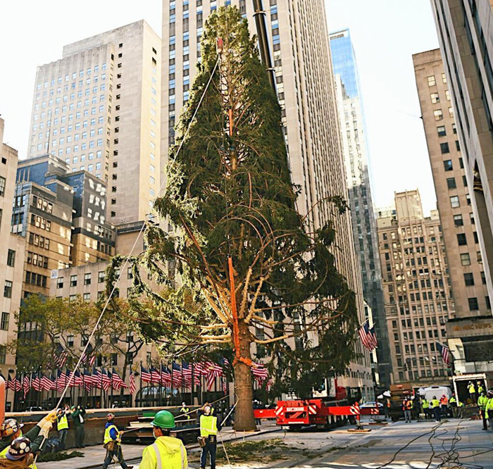 Rockefeller Center Put Up A Christmas Tree, Everyone Started Mocking It, So They Clapped Back