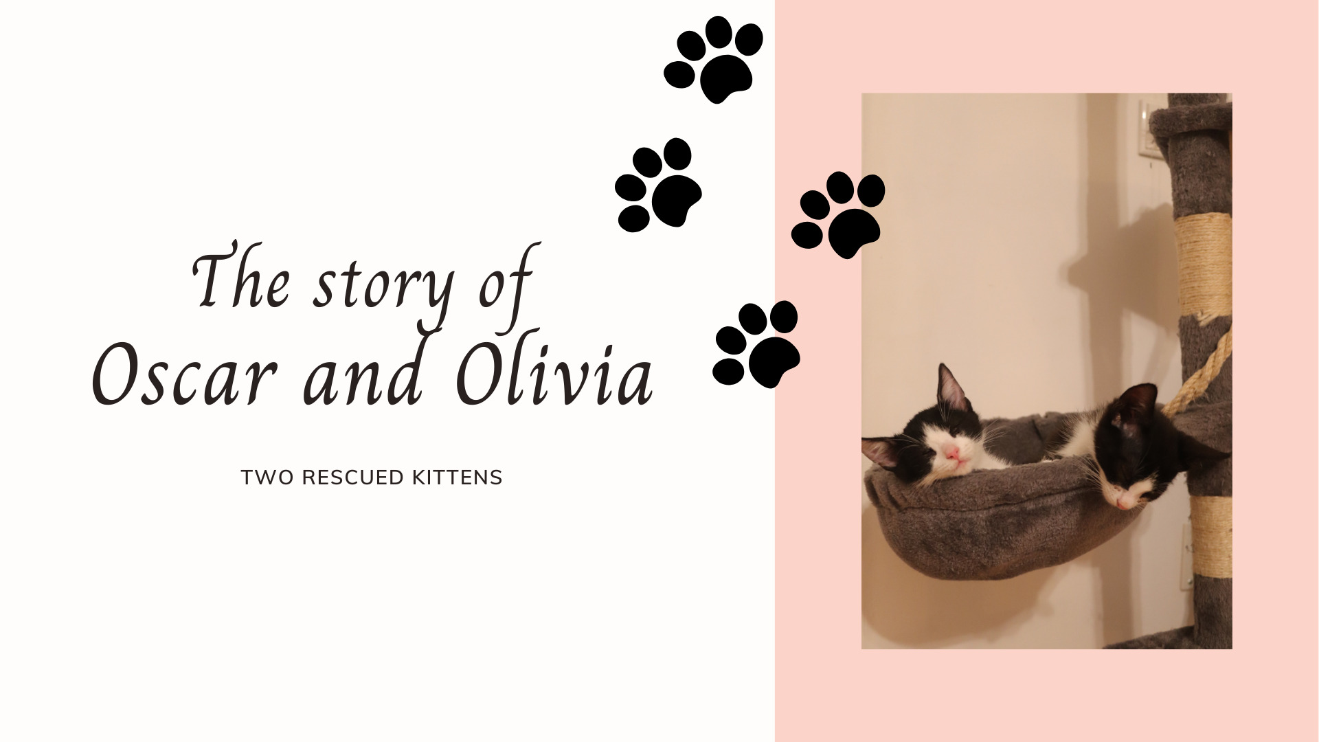Our Rescued Kittens: Oscar's And Olivia's Story