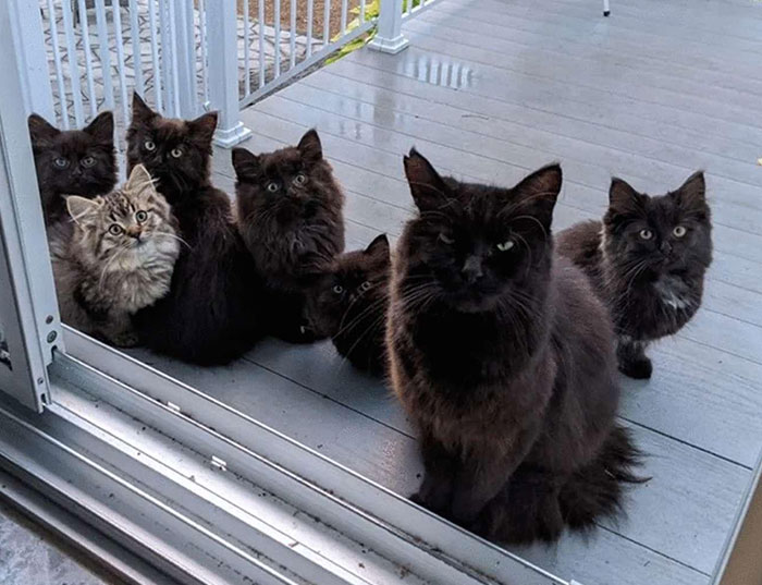 Stray Cat Brings All Her Babies To A Woman Who Gave Her Food And Helped Her