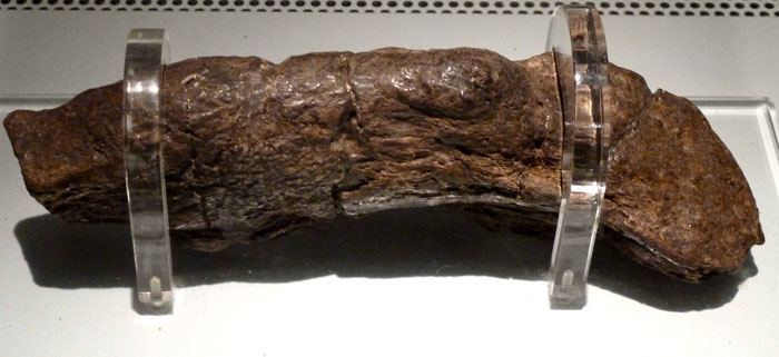 The Largest Fossilized Human Feces Found On Earth So Far Named The Lloyds Bank Coprolite