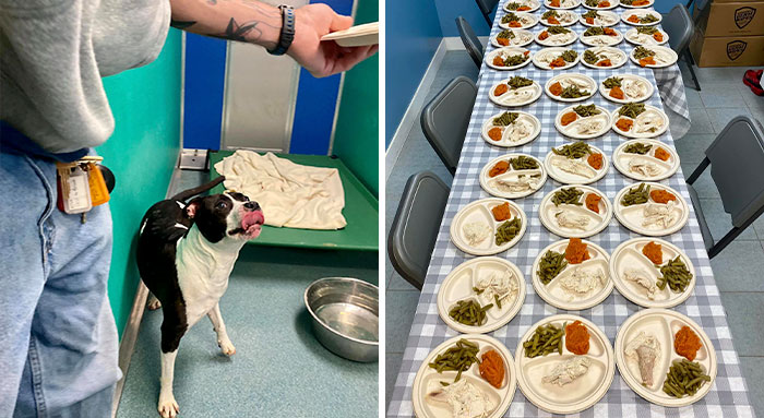Nearly 80 Shelter Animals Get Treated To A Festive Thanksgiving Meal