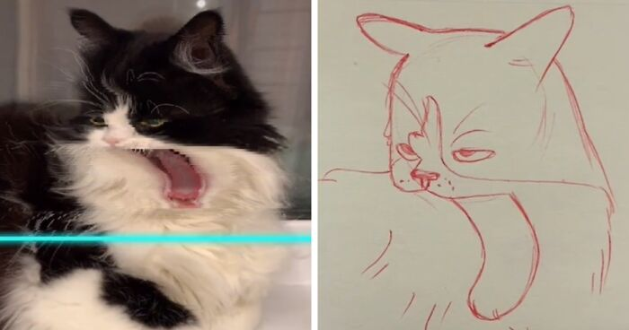17 Funny Illustrations Of Cats And Dogs After They Were Captured With The Time Warp Scan Filter Drawn By An Artist On Tiktok Bored Panda