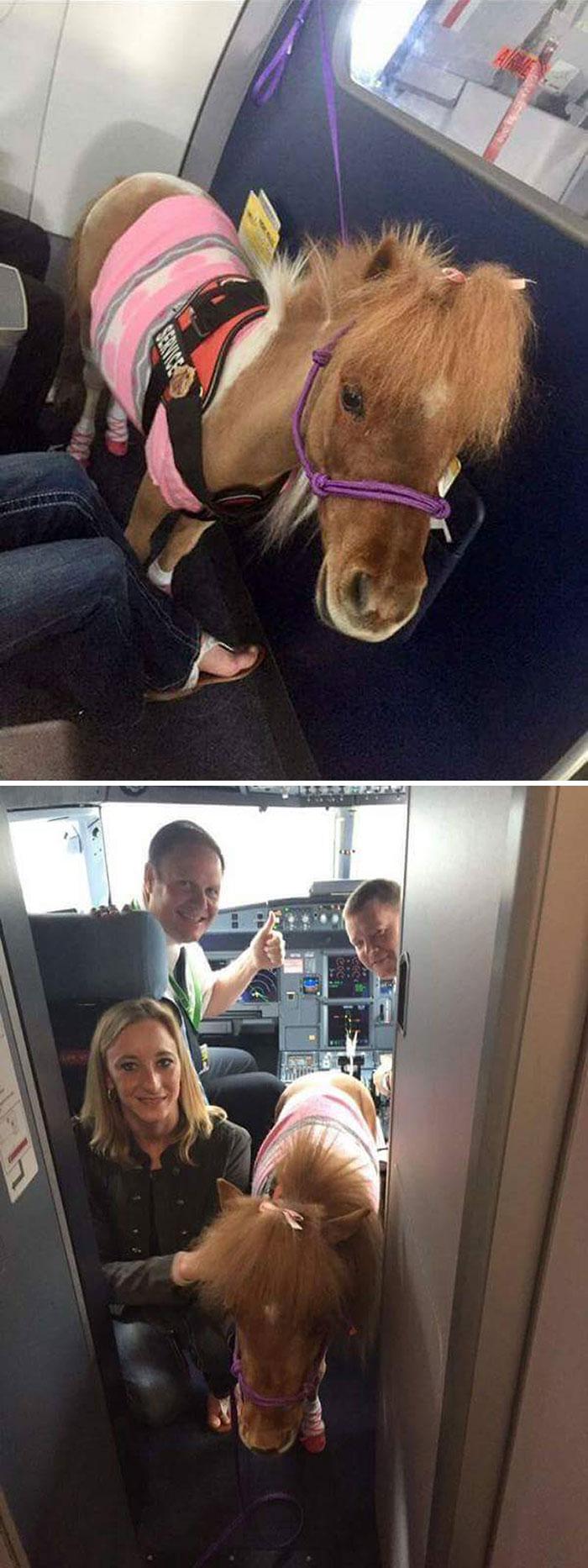 Flight Attendant: Episode 7